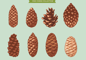 Set of Pine Cone on Green Background - бесплатный vector #441953