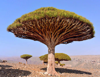 Dragon's Blood Tree - image #442203 gratis