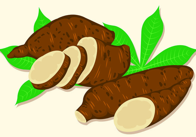 Vector Illustration Of Cassava - vector gratuit #445103