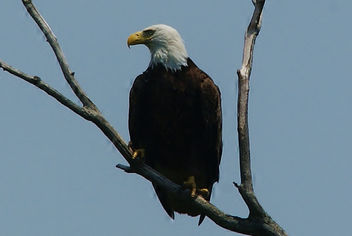 The Eagle Has Landed - Free image #445373