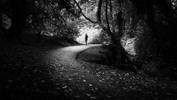 St. Anne's park - Dublin, Ireland - Black and white street photography - бесплатный image #446553