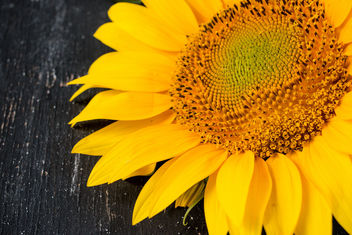 A sunflower / Sonnenblume - Free image #447233