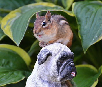The Chipmunk Just Met Boo Lefou! - image gratuit #447453