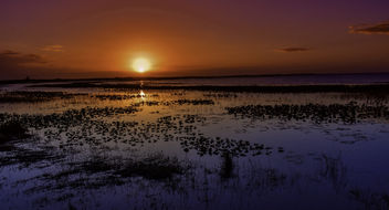 Lake Kissimmee Sunset - Kostenloses image #447563