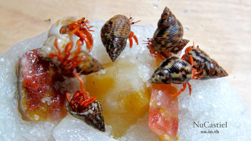 Land Hermit Crabs (Baby) - бесплатный image #447623