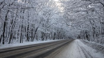 Winter road - Free image #448193