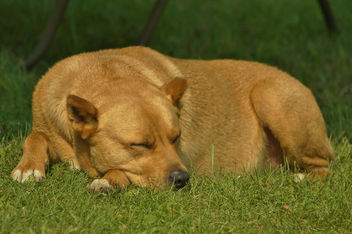 Let Sleeping Dogs Lie - image gratuit #448393