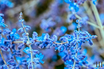 Powder Blue and Purple - бесплатный image #448543