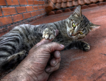 Gatos callejeros / Stray cats - image #448653 gratis