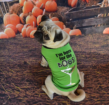 Found the perfect Halloween t-shirt for Mr. Boo Lefou! - image gratuit #449653