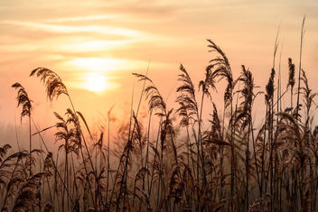 Golden Sunrise - image gratuit #449923