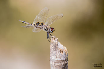 dragonfly - Free image #449953