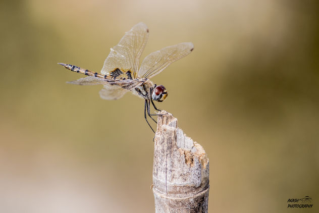 dragonfly - Kostenloses image #449953