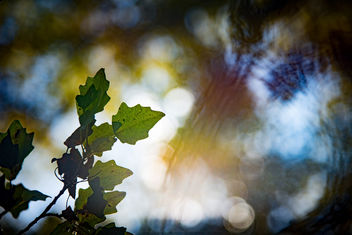 Under Wood Bokeh - image gratuit #450243