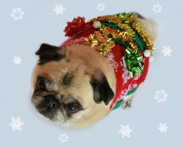 My Ugly Christmas Sweater - image gratuit #450563