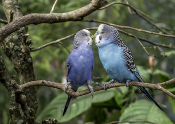 Love Birds - Free image #451593