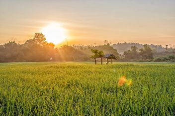 #sunrise on fields rice, #travel, #chiang mai, #thailand - Free image #452423