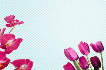 tulips and orchid on blue background - image #452593 gratis