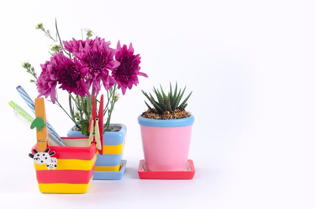 Flower pot on white background - image #452603 gratis