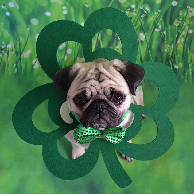 My Little Shamrock Lucky Boo Lefou - Free image #452613