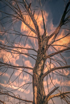 Naked tree and the clouds - бесплатный image #452863