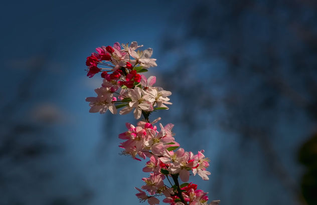 beautiful spring flowers - бесплатный image #453393