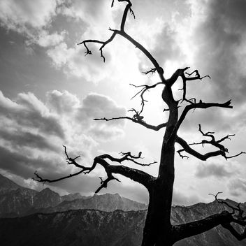 The Tree - Seoraksan, South Korea - Black and white photography - Free image #453563
