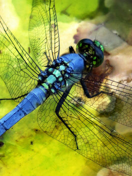 Dragonfly close up - image #453903 gratis