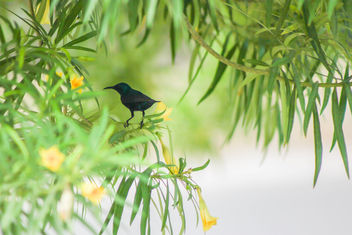 Some insanely black bird - image #454053 gratis