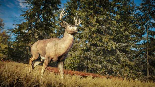 TheHunter: Call of the Wild / Nature Documentary - image gratuit #455033