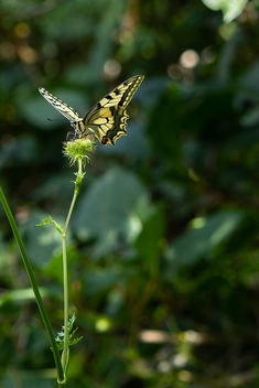 My first butterfly ! - Free image #455353