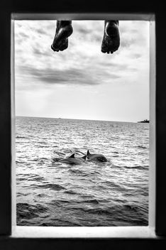 Dolphin watching - Maldives - Black and white photography - image gratuit #455643