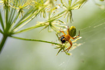 Dinner is ready - Hungry spider - image gratuit #455753