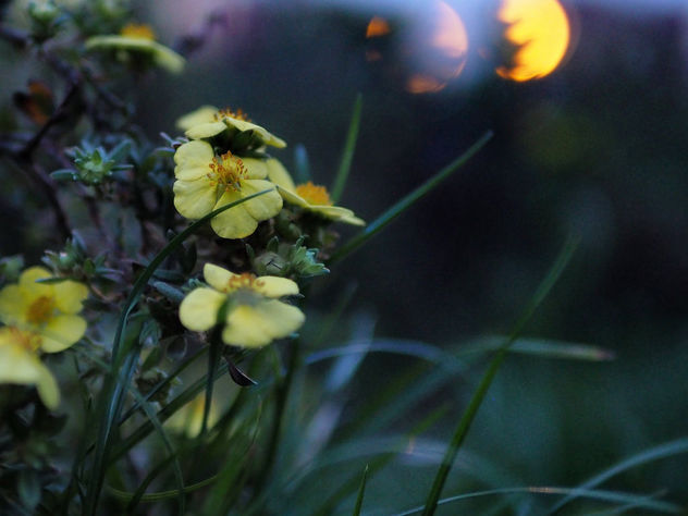 Yellow Flowers - image #456163 gratis