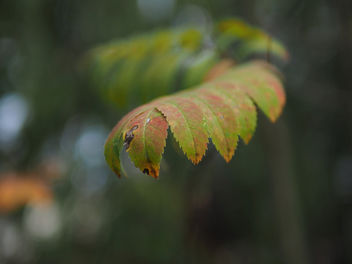 Colorful leaves - image #456513 gratis