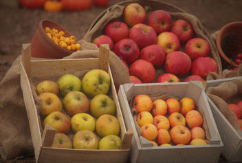 Fruits of the Season - Free image #456663