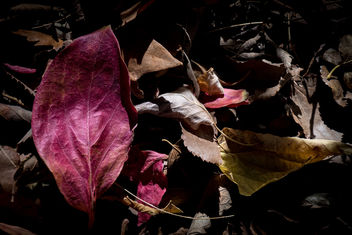 Deep Autumn - image gratuit #456803