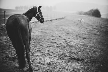 Horse with no name - Free image #456823