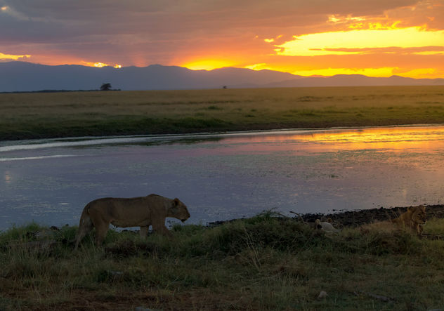 African Sunset, Amboseli National Park - image #458063 gratis