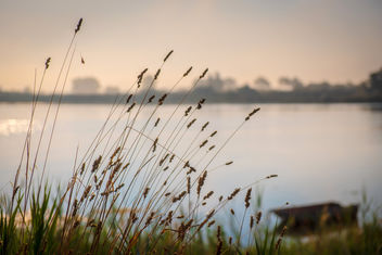 Camargue Morning - image gratuit #459143