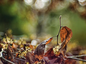 Leaves - image gratuit #459593