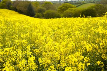 Rapeseeds farms, Burntwood, England - Free image #460883