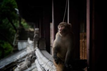 Temple Monkey - image #460973 gratis