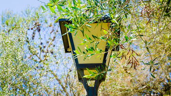 A decorative, retro-styled, public street lantern under a canopy of leaves - Free image #461033