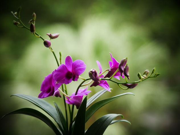 orchid - Kostenloses image #461073