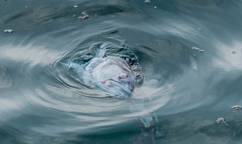 Death fish in the sea - бесплатный image #463453