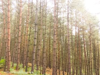 Birches valley, Cannock, England - Free image #463533