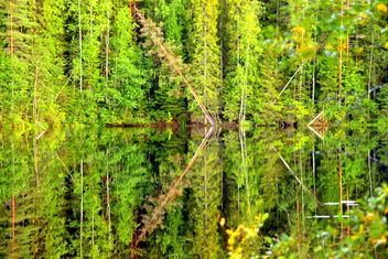 Green symmetry and reflections, - бесплатный image #463793