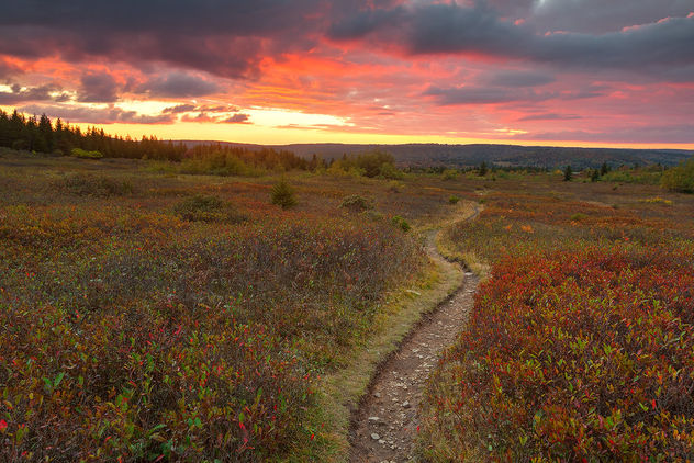 Dolly Sods Twilight Trail - Kostenloses image #464683