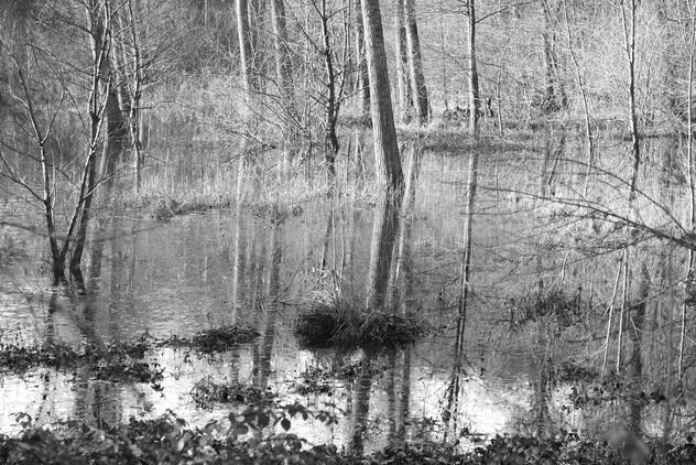 Water, trees. - image #473393 gratis